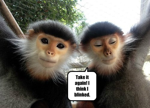 monkeys captions funny - 8453568768