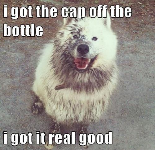 animals bottle dogs whoops Nailed It mess - 8453676288