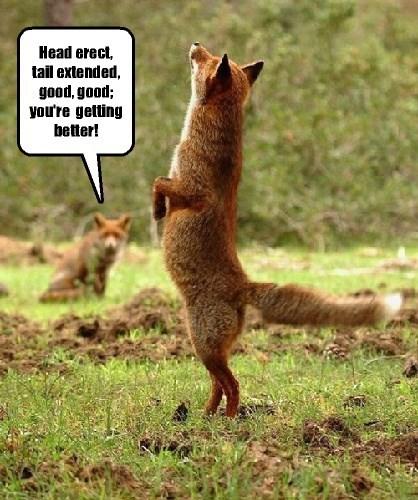 fox,captions,funny