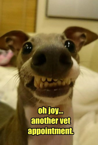 dogs Joy appointment vet captions funny - 8453927936