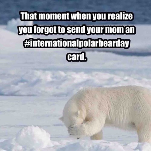 Polar bear - That moment when you realize you forgot to sendyour mom an #internationalpolarbearday card.