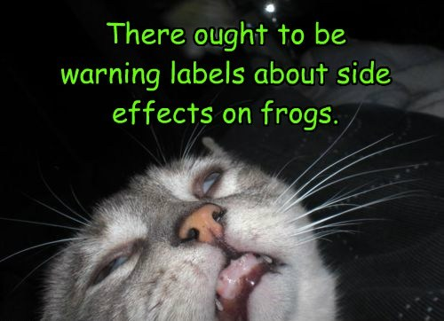 warning drugs lick tongue Cats frog - 8454028032
