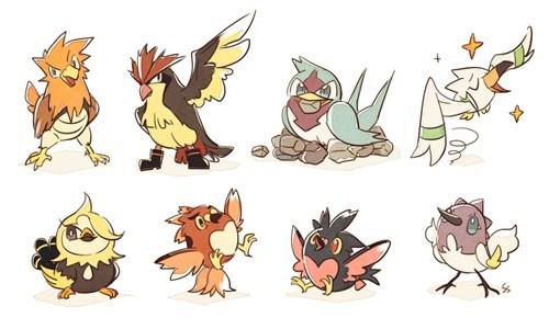 Pokémon birds champs - 8454201088