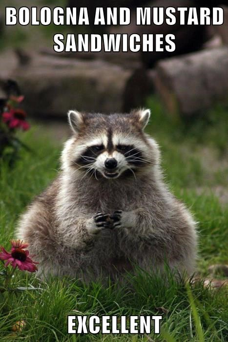 excellent,picnic,raccoon,noms