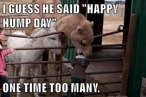 animals hump day camel stahp world domination noms - 8454460672