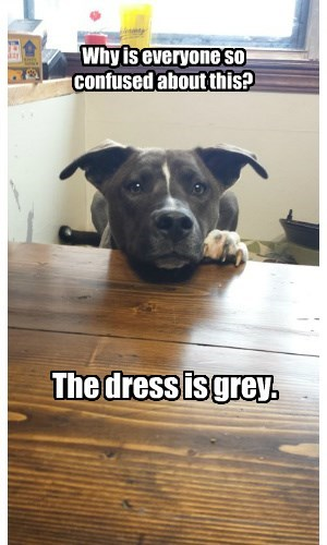 dogs grey dress - 8454493696