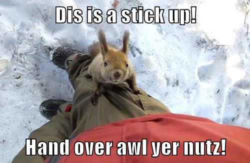 animals stick up squirrel captions nuts funny - 8454493952