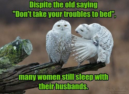 captions owls spouses joke - 8454978816