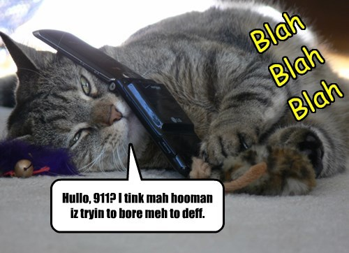911,phone,bored,Cats