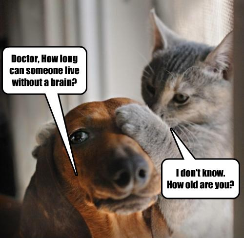 dogs brains dachshund Cats - 8454985728
