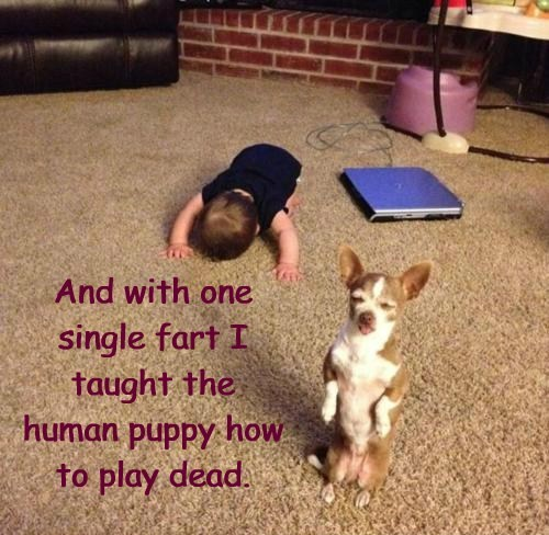And with one single fart I taught the human puppy how to play dead. And with one single fart I taught the human puppy how to play dead.