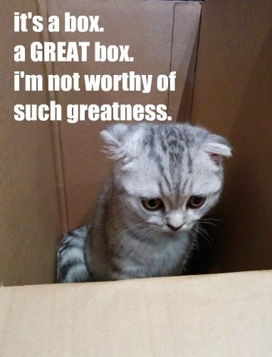 box if i fits i sits Cats - 8455063296