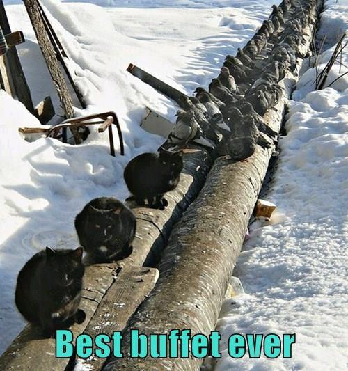 animals buffet birds Cats - 8455234304
