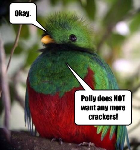 cracker full bird noms - 8455253760