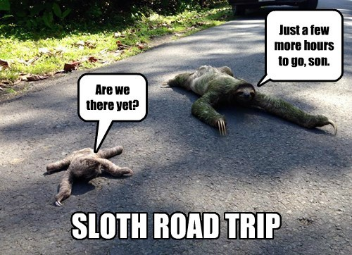 crossing the road sloths funny captions - 8455448064