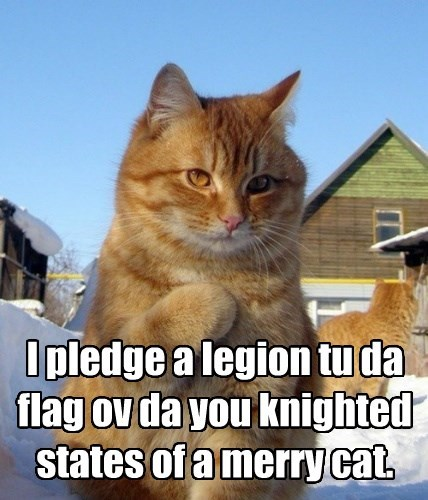 The states of a merry cat are knighted.