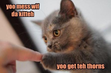 duel boop kitten fist bump Cats squee - 8455672832