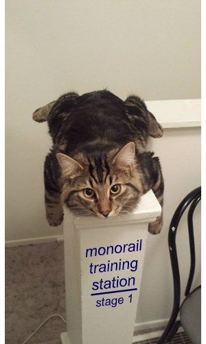 noob monorail cat Cats - 8455732992