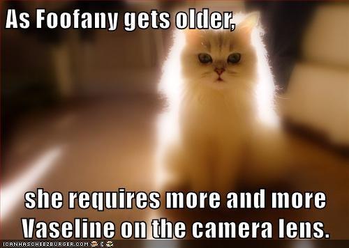 animals cat vaseline lens camera caption - 8455767552