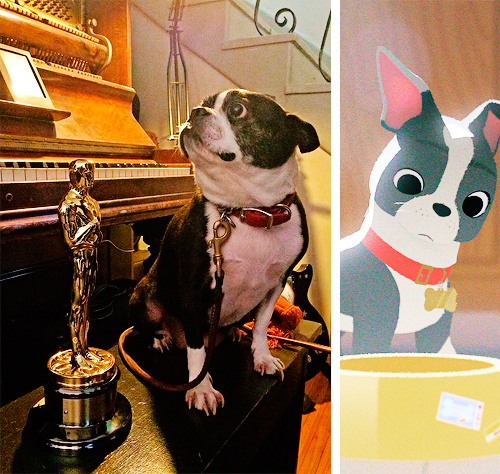 dogs,disney,fancy feast,cute,Short Film