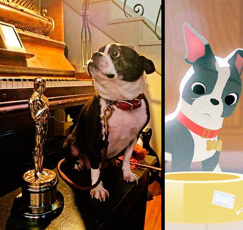 dogs disney fancy feast cute Short Film - 8455795200