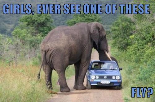 animals fly car elephant dumbo - 8455933952