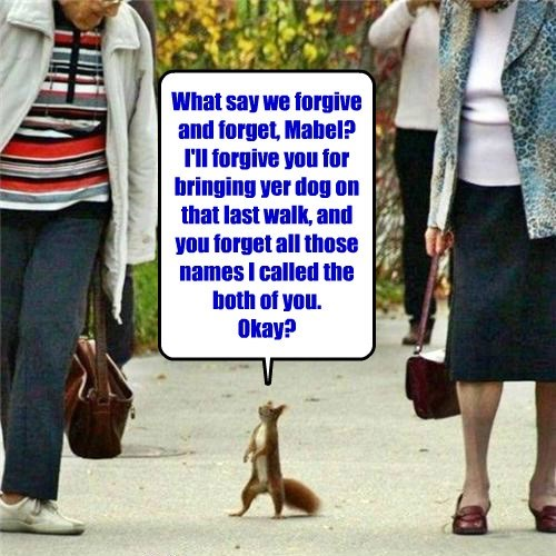 squirrel apologies nuts captions - 8455936768