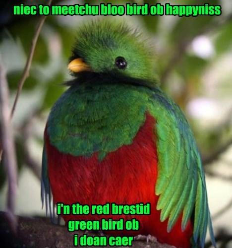 cute bird sarcasm funny - 8456129024