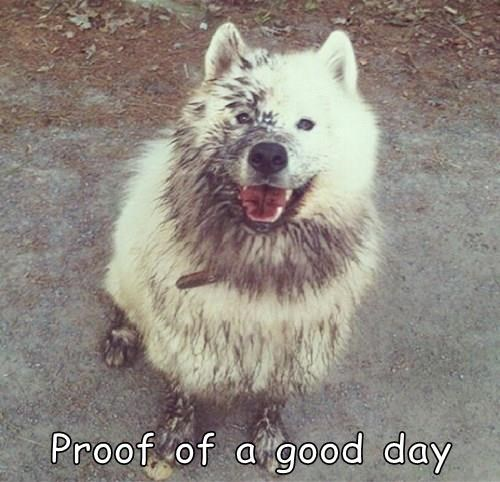 dogs,samoyed,FRIDAY,good day