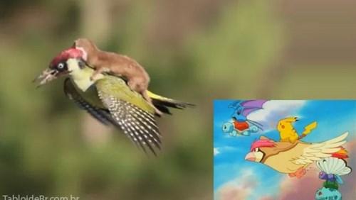 Pokémon wtf Weaselpecker animals