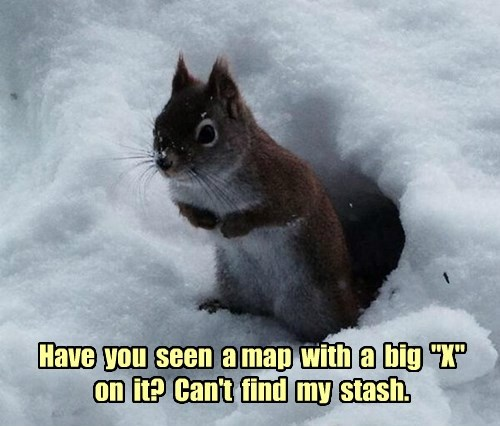 stash,map,squirrel,treasure,nuts,captions
