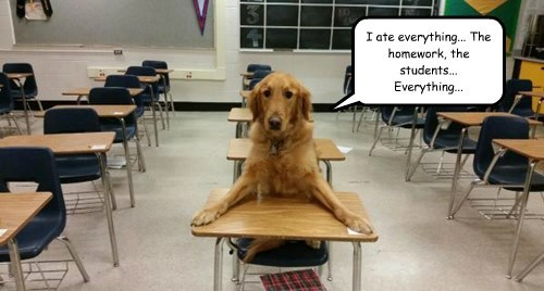 homework dogs eat golden retriever - 8456365568