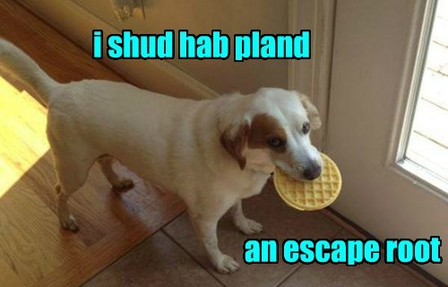 waffle,caught,dogs,noms,thief