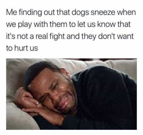 Meme about dogs sneezing