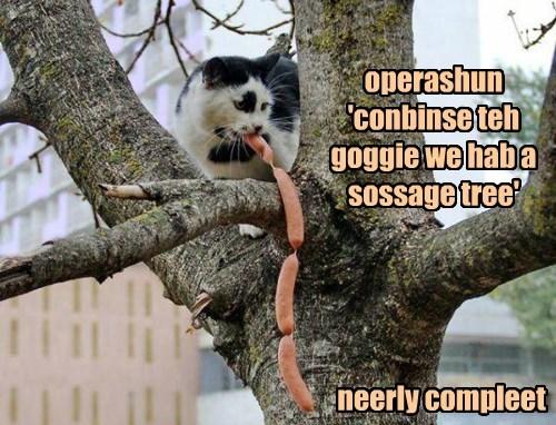 operashun 'conbinse teh goggie we hab a sossage tree' neerly compleet