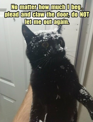 cat,black cats,snow,winter