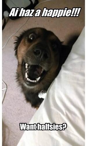 half dogs happy smile - 8456676608