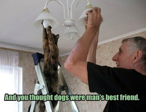 BFFs light bulb Cats - 8456728320