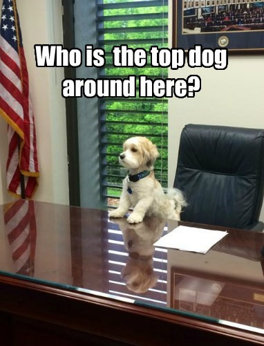 Who is the top dog around here?