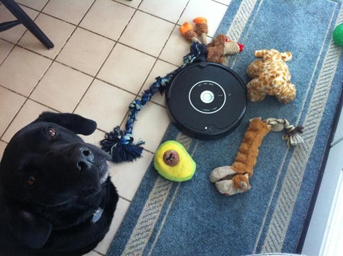 dogs,roomba,toys,trapped,Black Lab,win