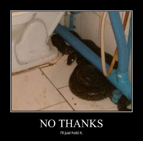 wtf poop toilet snakes funny - 8456833792