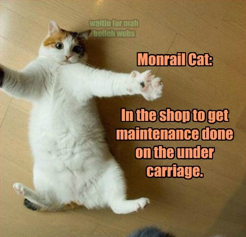maintenance monorail cat belly rubs Cats