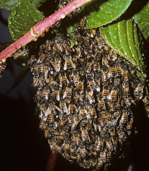 funny-news-fail-bees