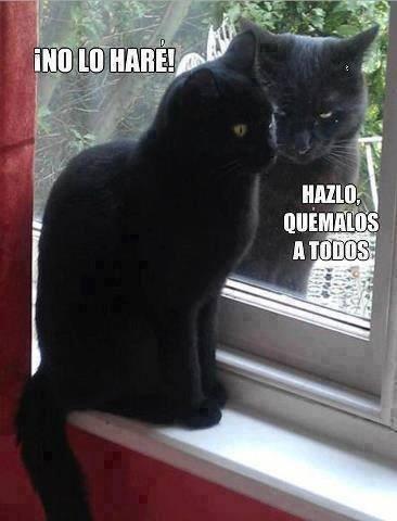 gatos bromas Memes animales - 8457414144