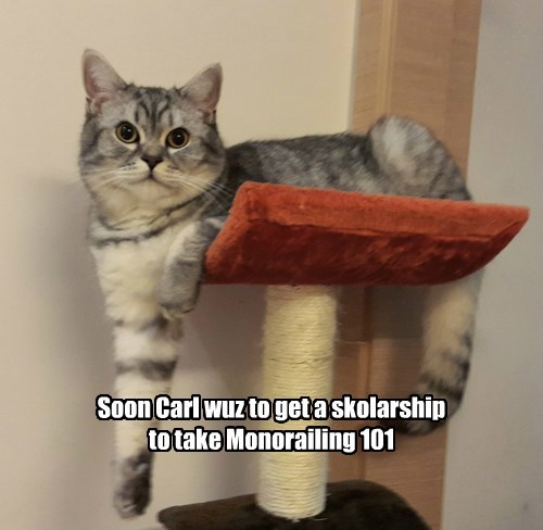 Cats,monorail cat,intern,scholarship