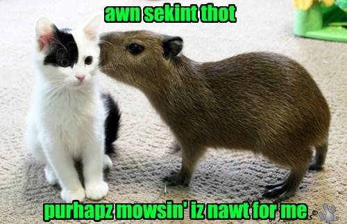 capybara baby animals rodent kitten Cats - 8457621504