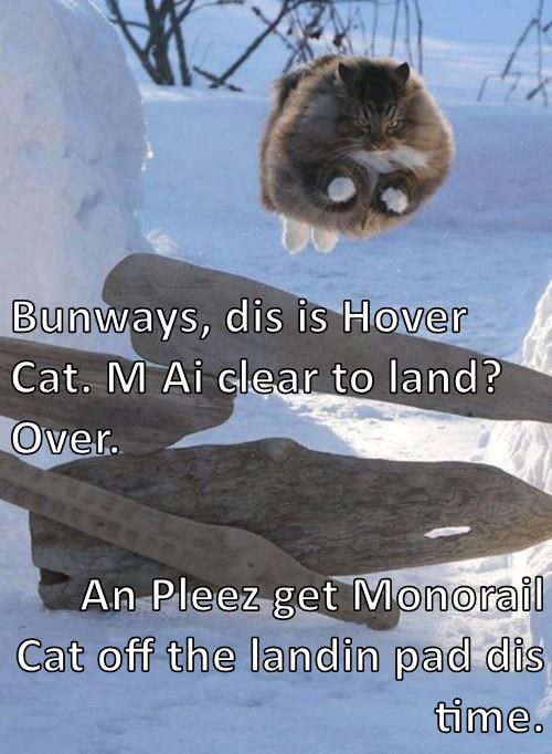 animals Cats HoverCat flying monorail cat