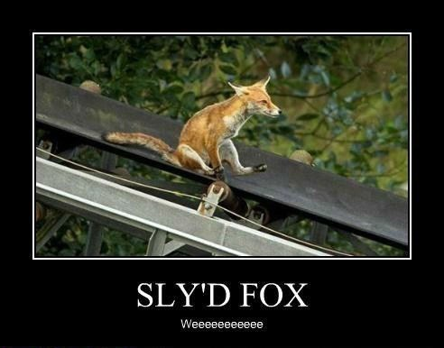 slide,fox,funny,sly