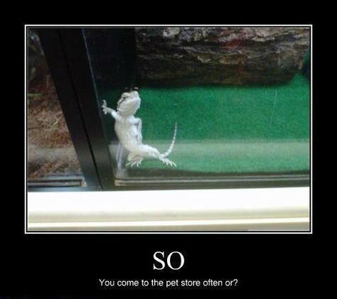 wtf lizard sexy times funny - 8457742848