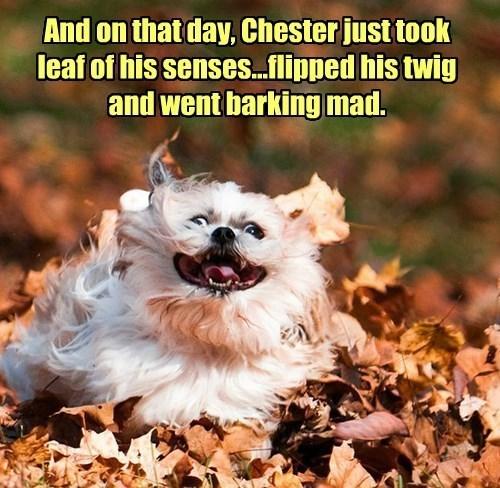 insane dogs shih tzu puns derp - 8458009344